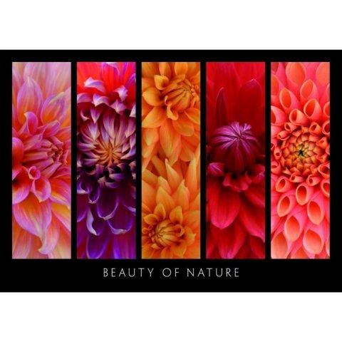 Ravensburger - Пъзел 1000 елемента Красотата на природата
