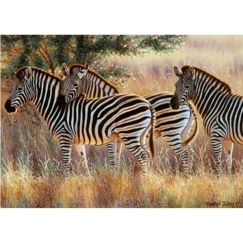 Ravensburger - Пъзел 1000 елемента Красиви зебри